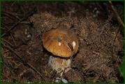 http://img-fotki.yandex.ru/get/29815/15842935.382/0_ead5b_ac8df290_orig.jpg