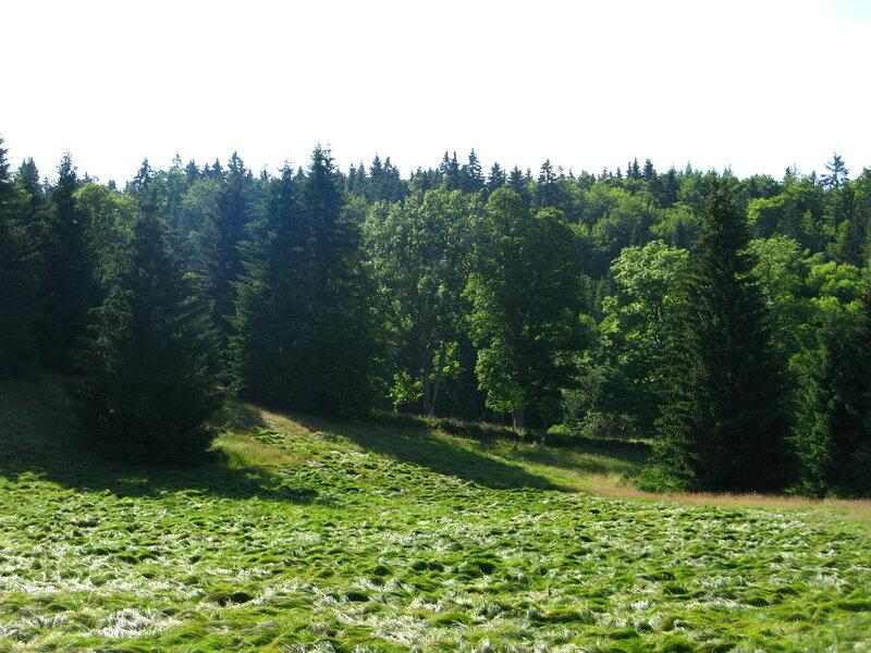 Милая зеленая травка, как всегда, скрывает болота...