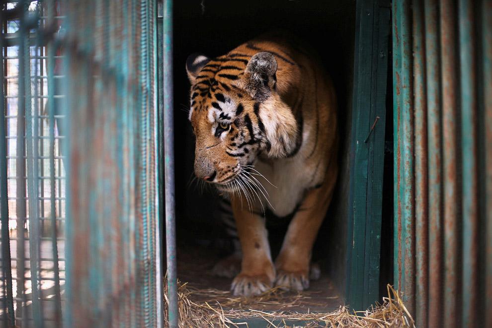 16. Но большая часть животных из самого худшего в мире зоопарка попала в Иорданию. Черепаха при