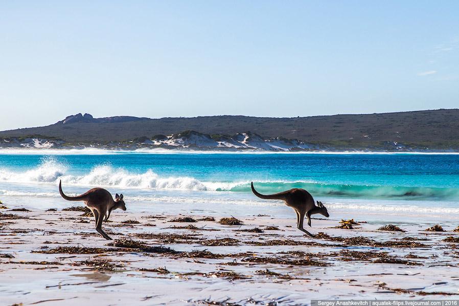 20. Селфи на память с одного из самых вкусных мест Западной Австралии...