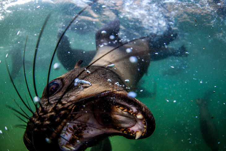 1. Этих игривых существ снял фотограф Rainer Schimpf у африканского побережья. Они совсем не бо