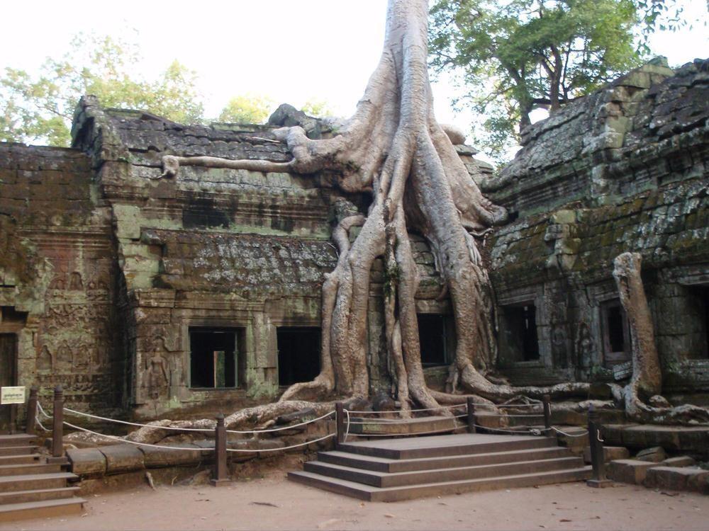 49. Хотя город Сиемреап относительно новый, он окружен древними руинами Ангкор-Ват — Города Храмов и