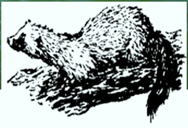 Иллюстрация к книге В.К.Арсеньева Дерсу Узала (18).jpg