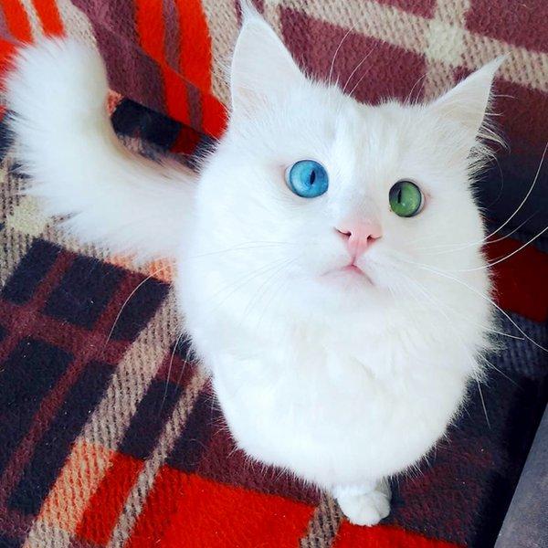 Самый завораживающий кот планеты