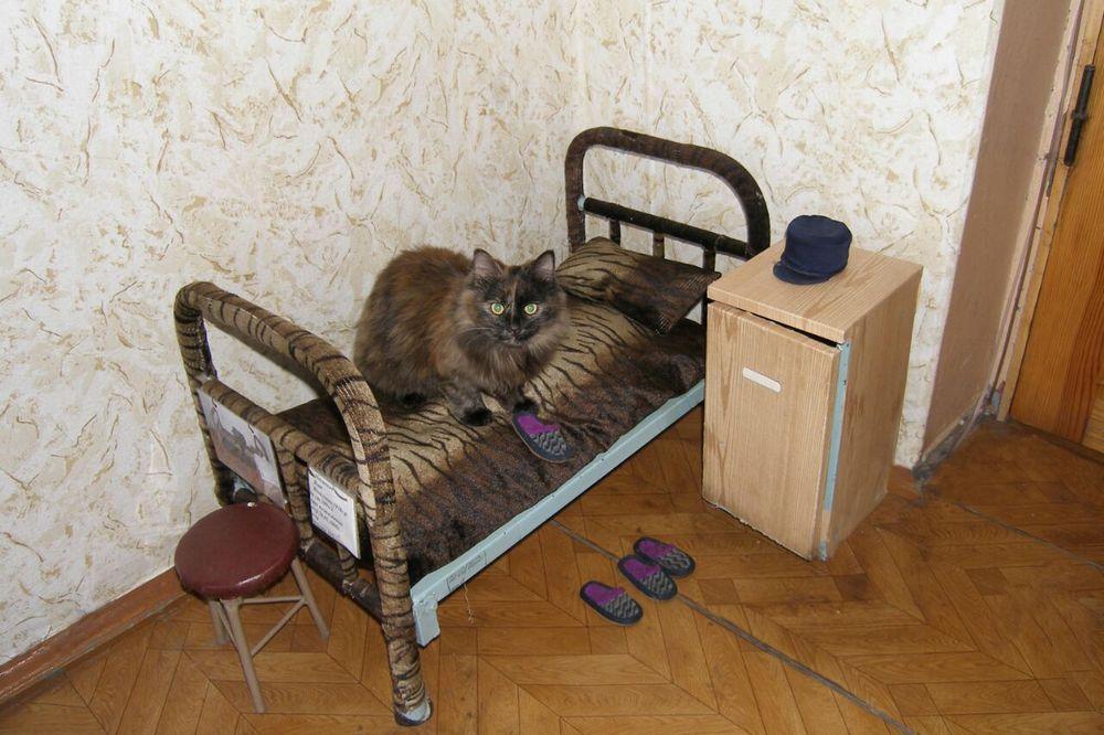 Кот в колонии