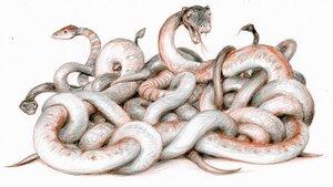 Змеи.jpg