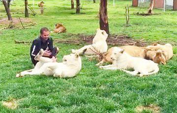 Человек даже не сразу поняла, что произошло: Тигр спас знакомого зоолога от ягуара (видео)