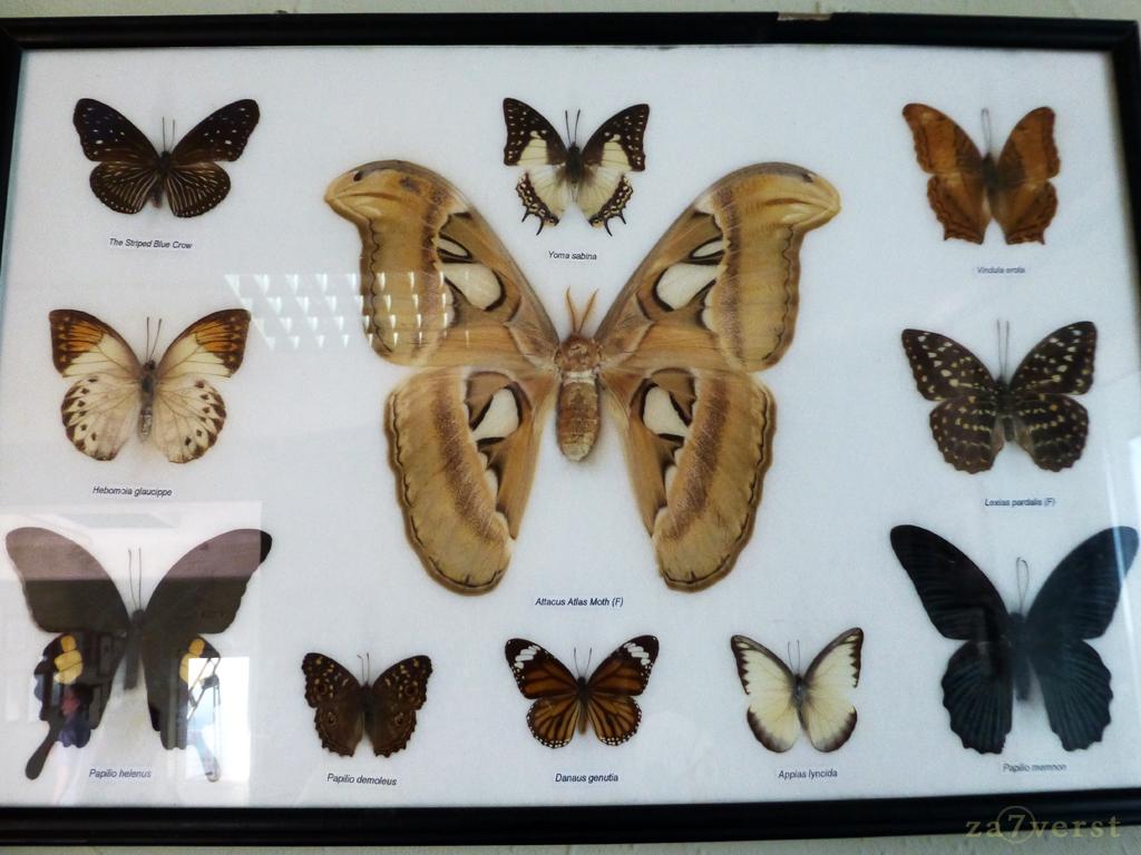 Сафари-парк в Геленджике. Выставка бабочек