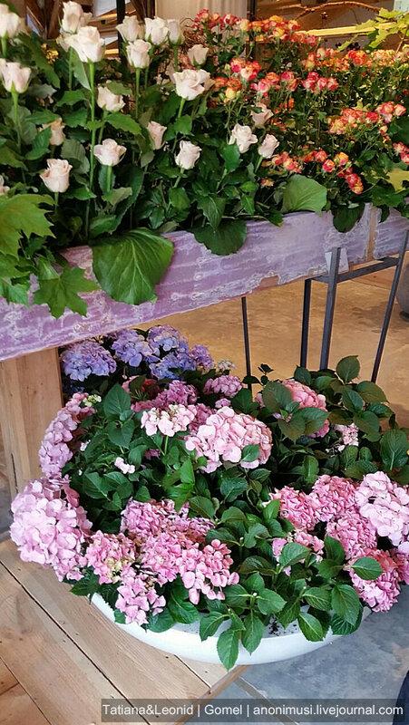 Выставка цветов в Германии