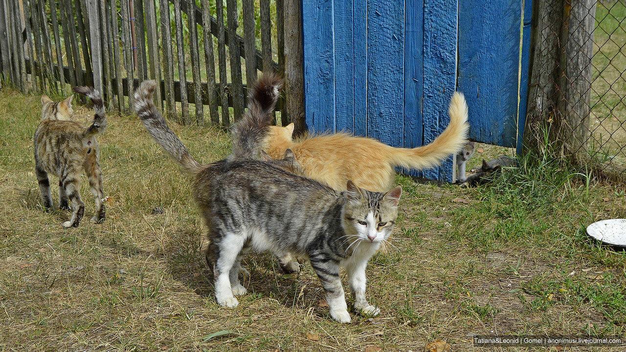 Беременные кошки