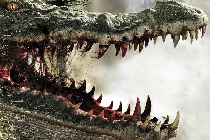 Снято видео: аллигатор съел своего собрата