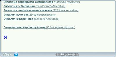 0_1019c4_302500d_orig.png