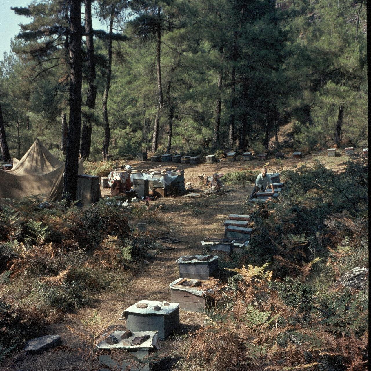 Тасос. Привал путешествующего пчеловода в горном лесу возле Панагии. 1964