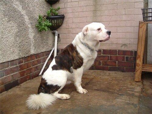Необычные собаки - миксы пород и редкие окрасы 0_6e5cd_45a859f4_L