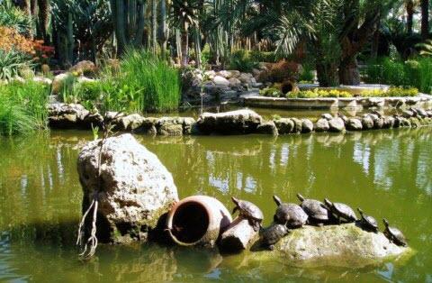 пальмовый парк.jpeg