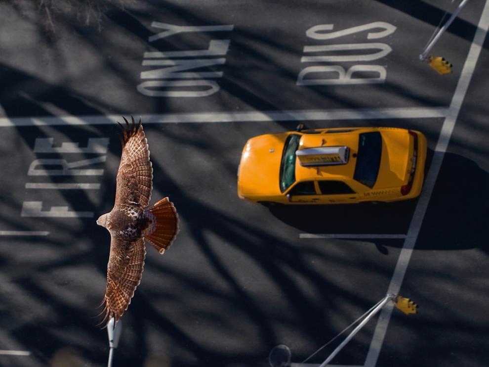 Лучшие фотографии National Geographic в декабре