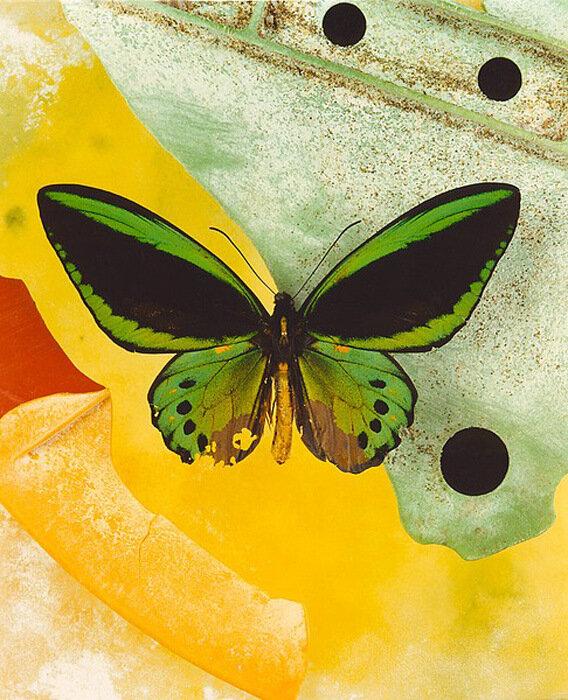 Jo Whaley - Butterfly