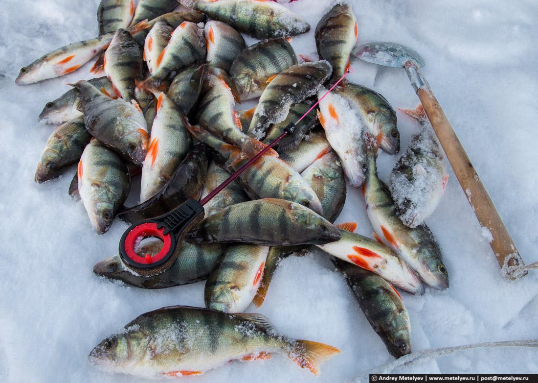 сунгуль озеро отчеты о рыбалке 2016