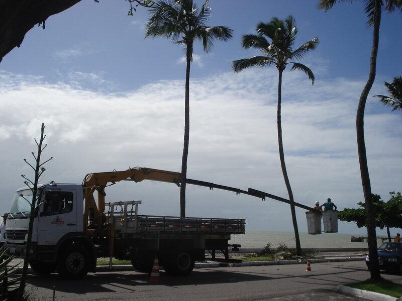 Обрезание пальм