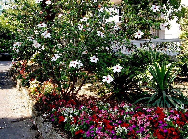 В саду консерватории Сан Ремо.
