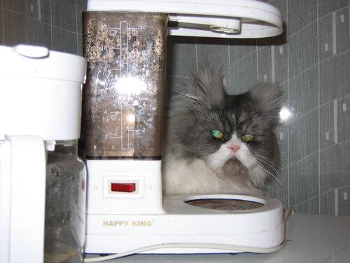 Аленький(Алёна) — «Ну, кто тут кофе хотел?» на Яндекс.Фотках