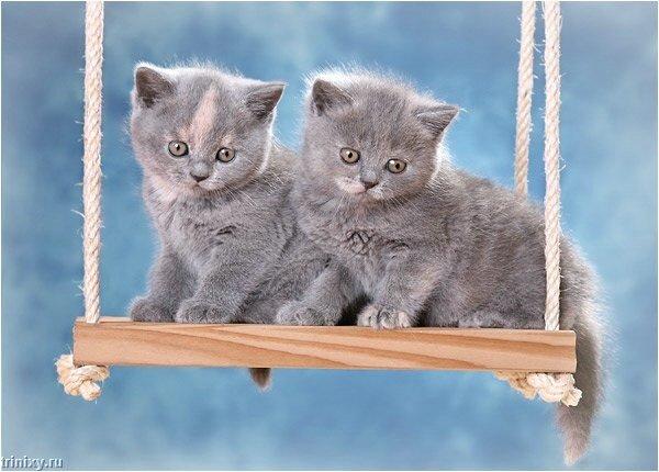 kittens_02.jpg
