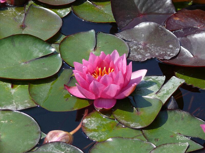 из ботанического сада
