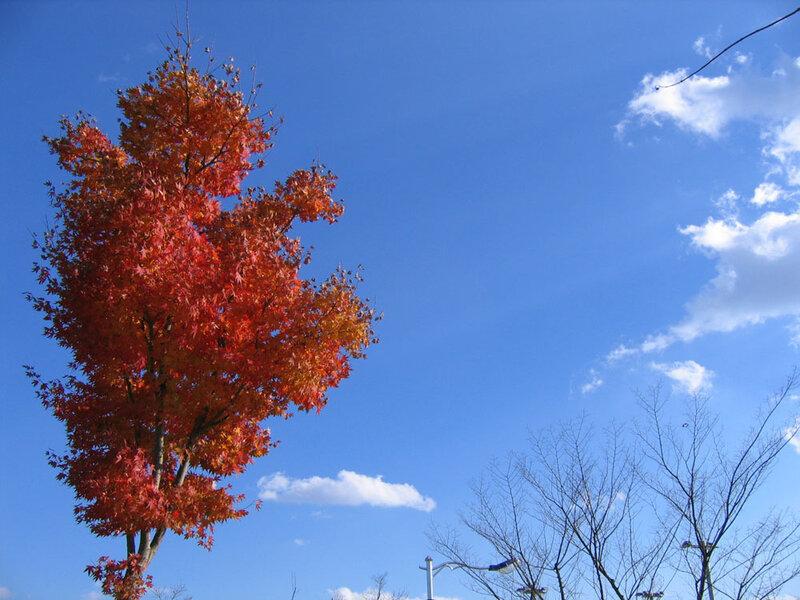 Дерево машет облакам