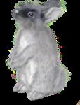 Rabbit 4.png