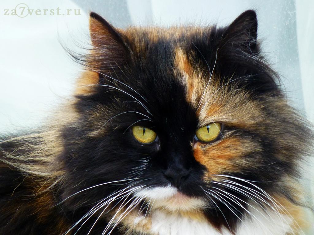 Йоськин кот, Евпатория, Крым