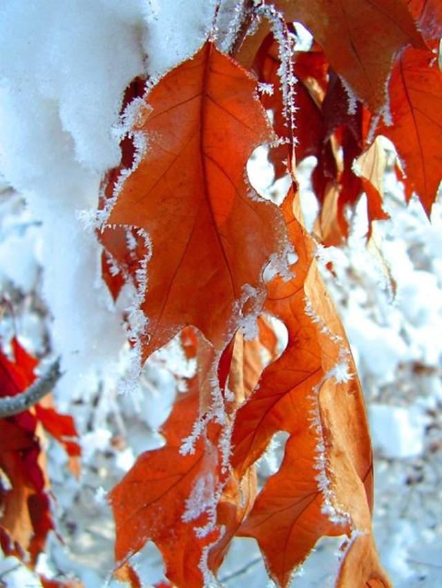 100 самых красивых зимних фотографии: пейзажи, звери и вообще 0 10f588 9efd3eeb orig