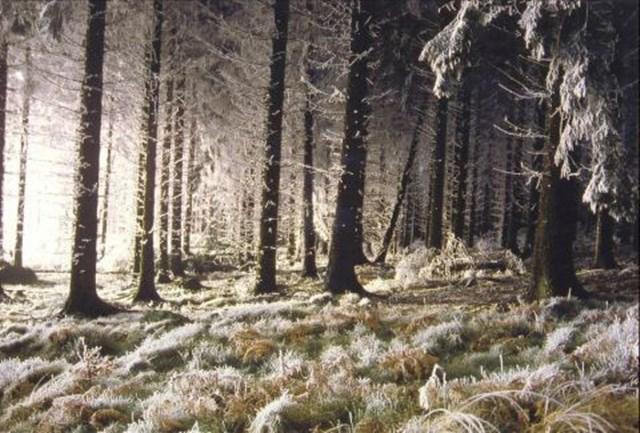 100 самых красивых зимних фотографии: пейзажи, звери и вообще 0 10f59e 28f4698e orig