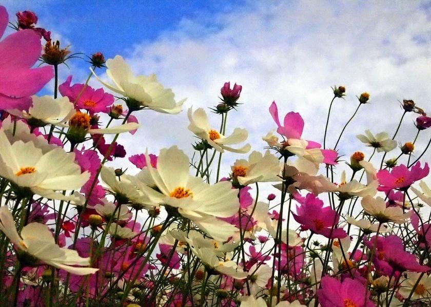 Живописный японский парк Хитати Кайхин 0 1422ec 88a342dd orig