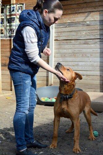 Барбос собака из приюта москва