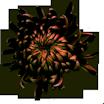 chrysanthme.png