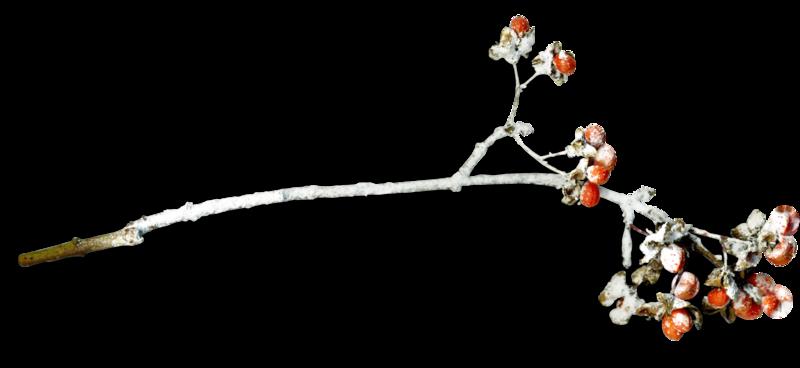 mzimm_snowflurries_branch1_sh.png