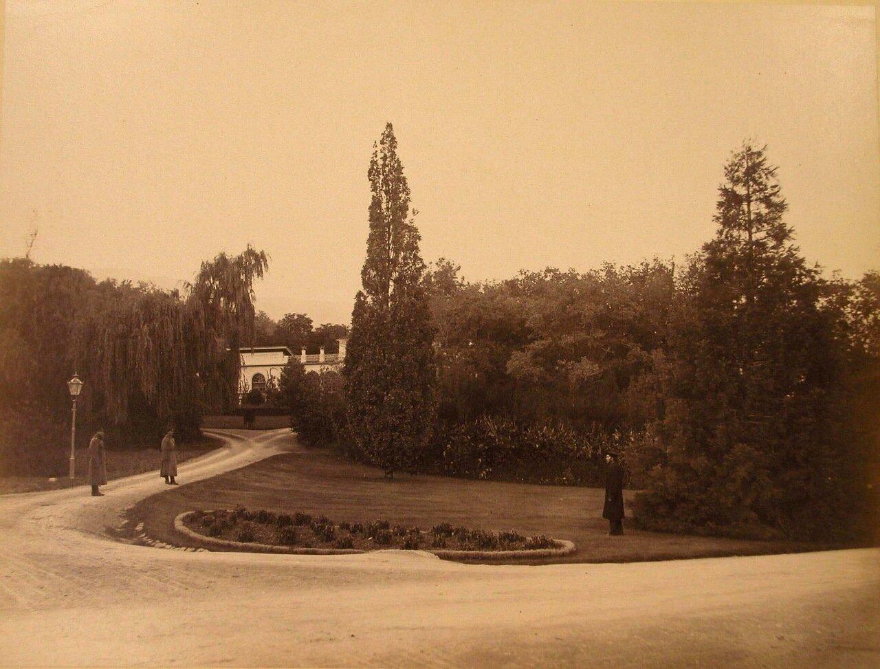 13. Ливадия. Дворцовые служащие на дорожке парка у пирамидального дуба вблизи оранжереи.