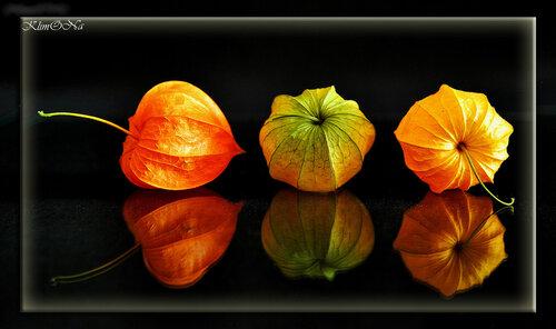 В оранжевых отражениях