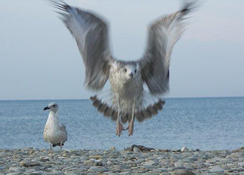 """Внимание! Сейчас вылетит """"птичка""""!"""
