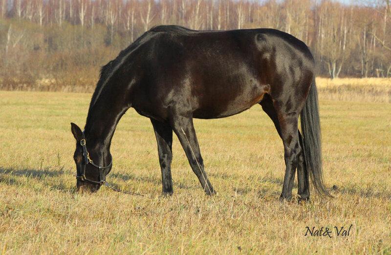 Коням нужна воля