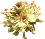 ldavi-fallingleavesautumntea-driedflower15.png