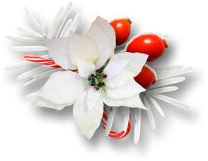 рождественский цветок-звезда