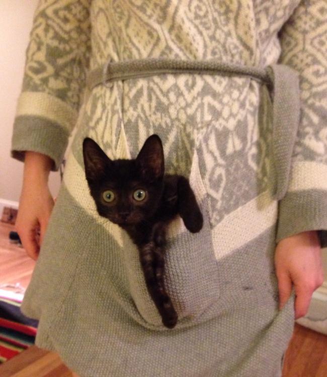 Мир сталбы добрее, еслибы укаждого вкармане был котик