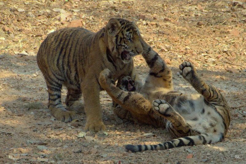 Тигровый храм