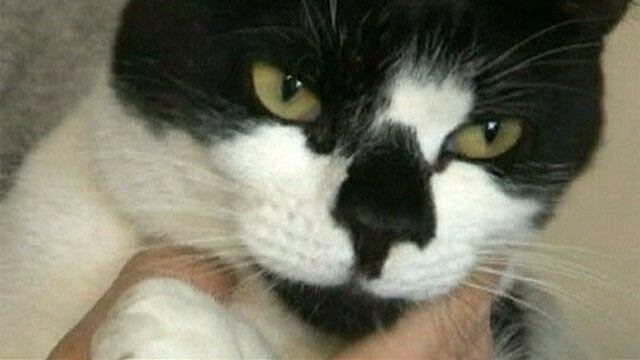 Видео коты клептоманы