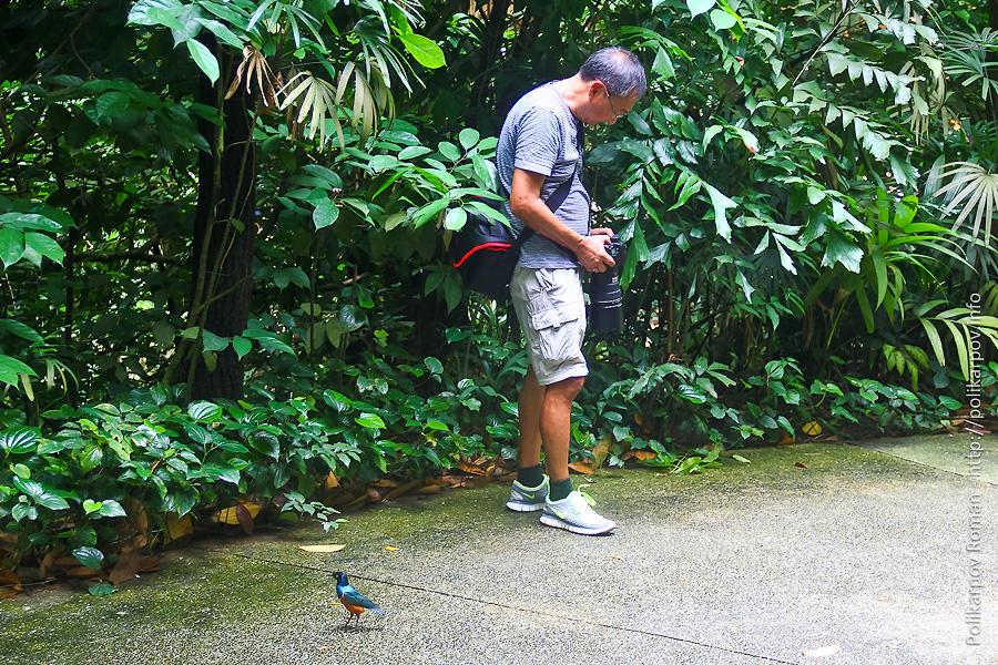 0 c4fc2 615127c4 orig Парк птиц Jurong в Сингапуре