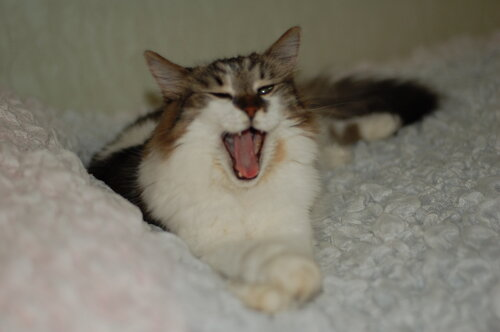 Nataru — «Кот Джоник» на Яндекс.Фотках