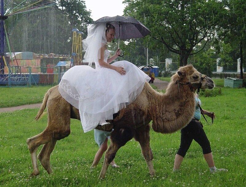 Дождик свадьбе не помеха....