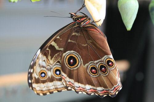 Бабочкарий на Тенерифе