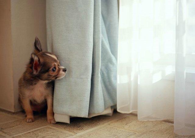 Супер-фотографии щенков.